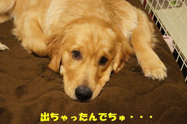 6_20120509214110.jpg
