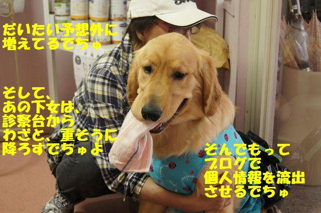 6_20120516194832.jpg