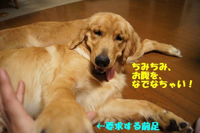6_20120520202327.jpg