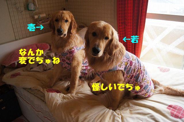 6_20120528213637.jpg