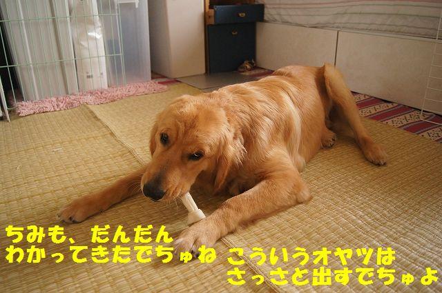 6_20120611202305.jpg