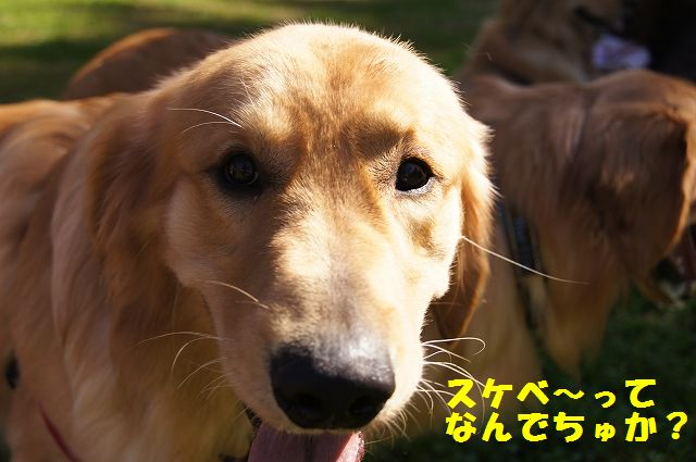 6_20121029101531.jpg