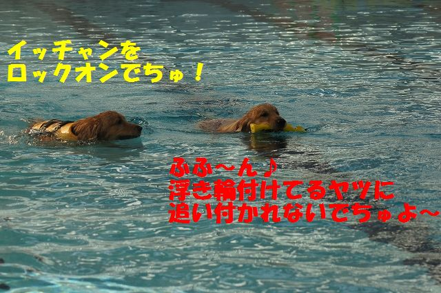6_20121226041125.jpg