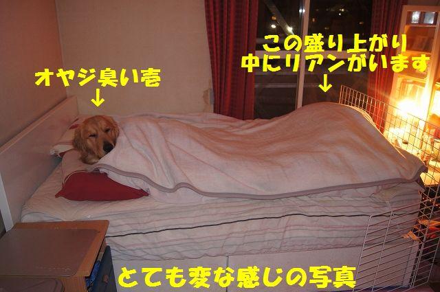 6_20130103172116.jpg