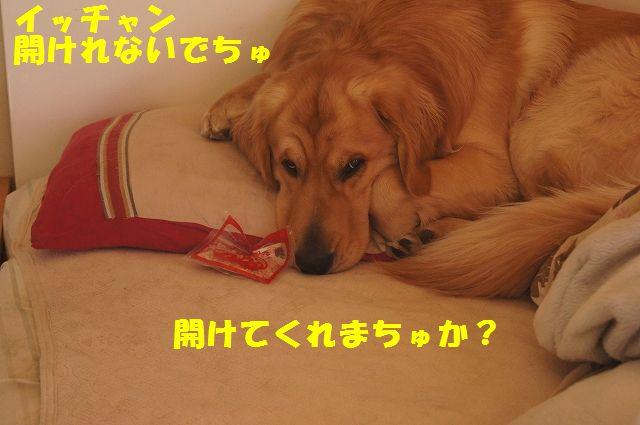 6_20130119070453.jpg