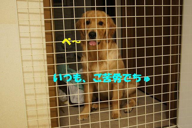 7_20120509214138.jpg