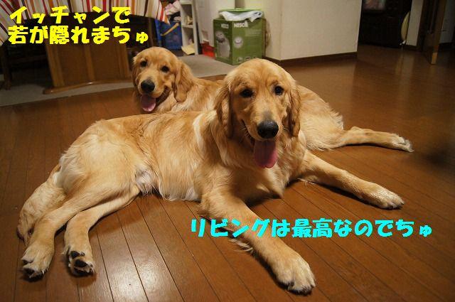 7_20120520202400.jpg