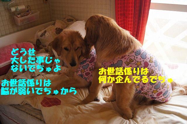7_20120528213728.jpg