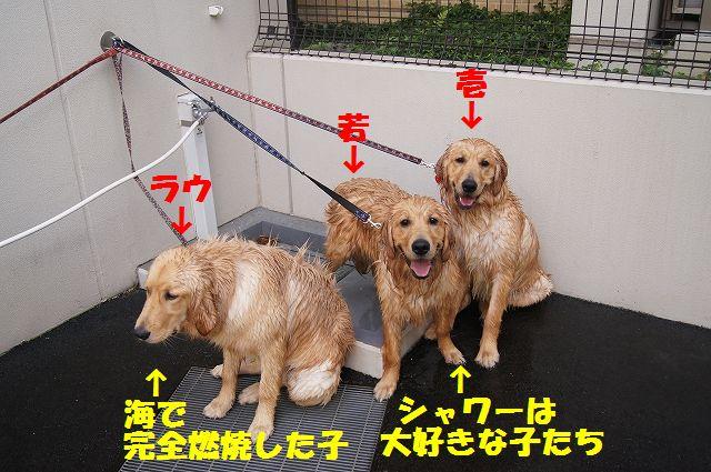 7_20120608011742.jpg
