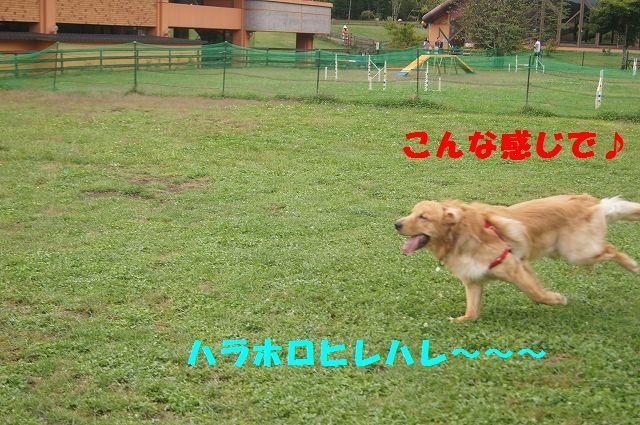 7_20121029044536.jpg