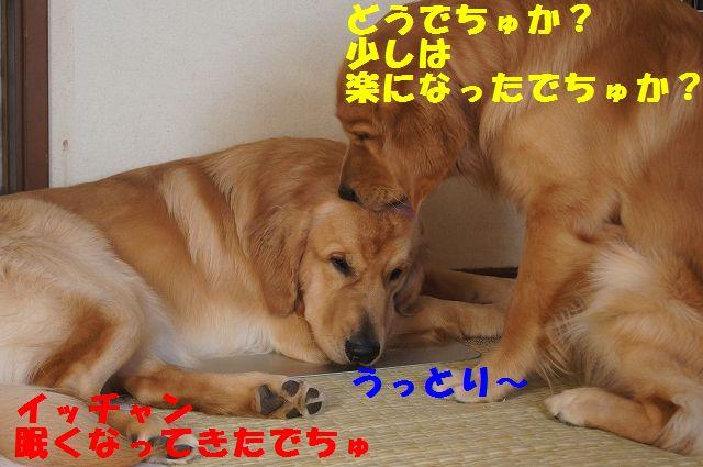 7_20121225115636.jpg