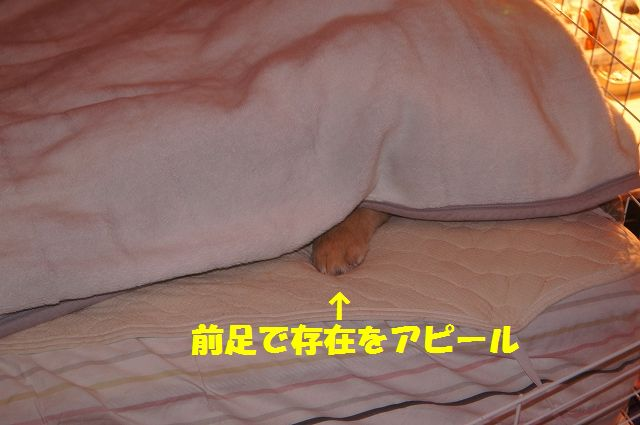 7_20130103172118.jpg