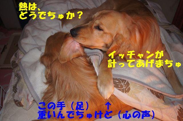 7_20130111210315.jpg
