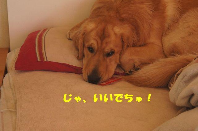 7_20130119070455.jpg