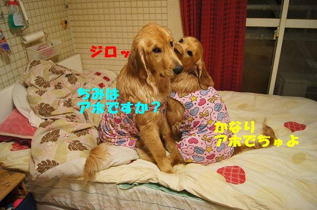 8_20120504013040.jpg