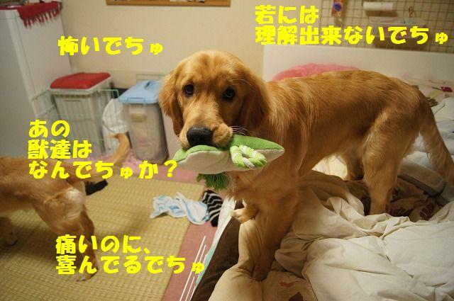 8_20120507014220.jpg