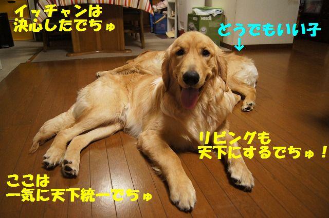 8_20120520202359.jpg