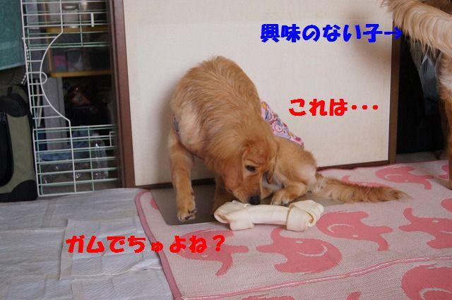 8_20120528213726.jpg