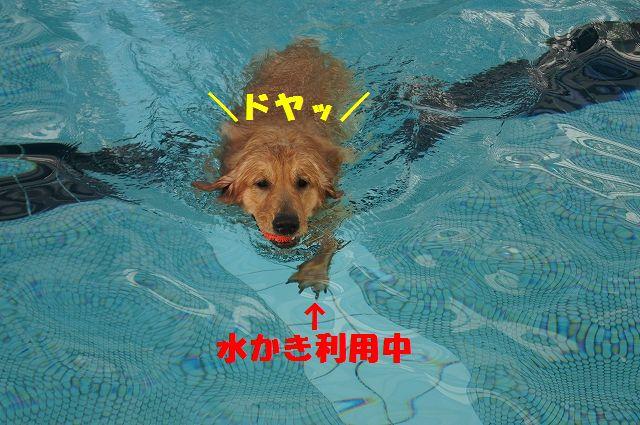 8_20121121031959.jpg