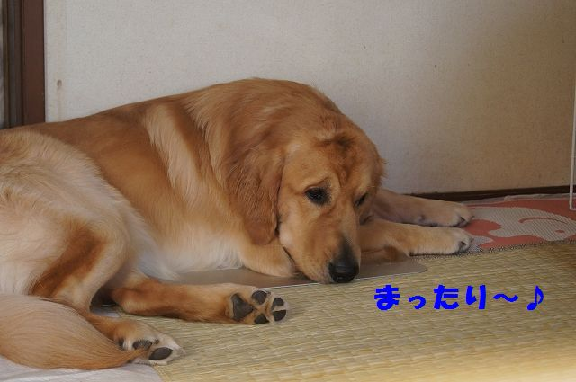 8_20121225115637.jpg