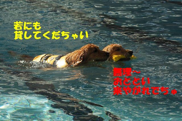 8_20121226041127.jpg