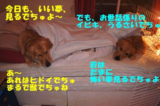 8_20130103172119.jpg