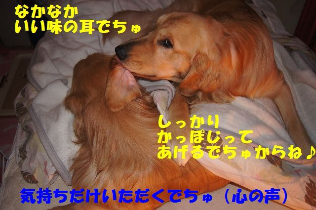 8_20130111210316.jpg