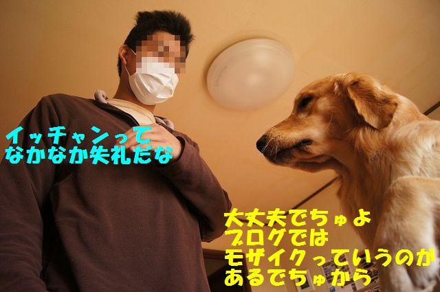 8_20130116171606.jpg