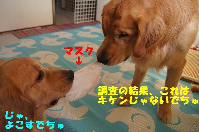8_20130119070456.jpg