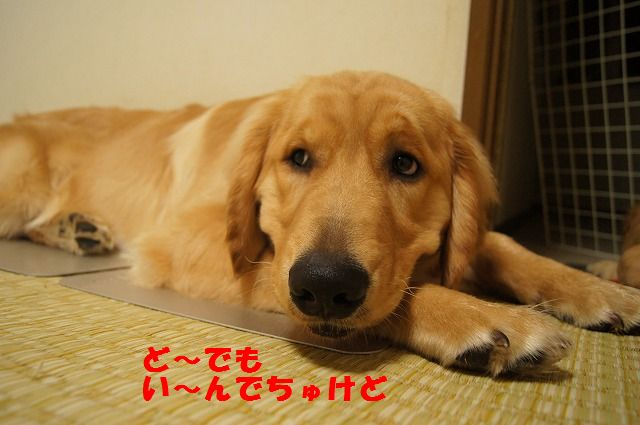 9_20120430000418.jpg