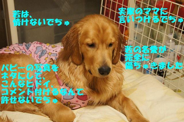9_20120504013039.jpg