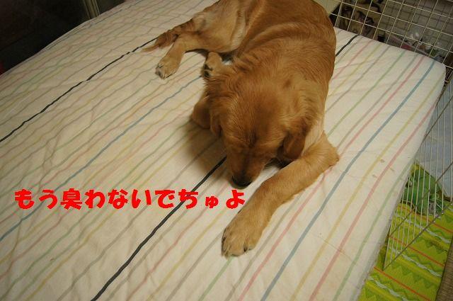 9_20120509214136.jpg