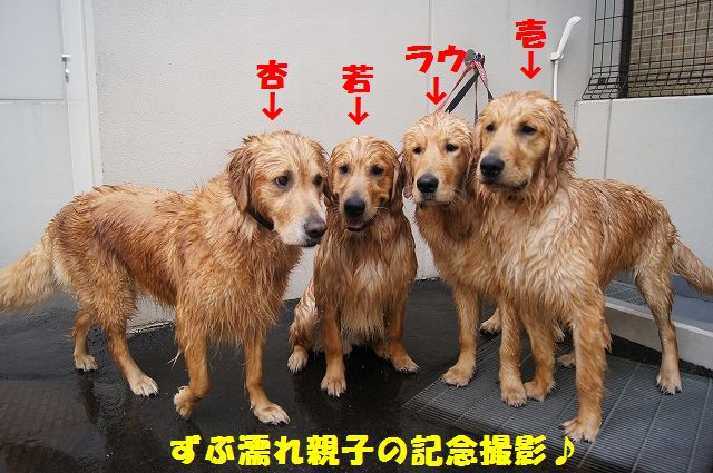 9_20120608011802.jpg