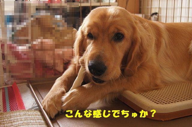9_20120611202342.jpg