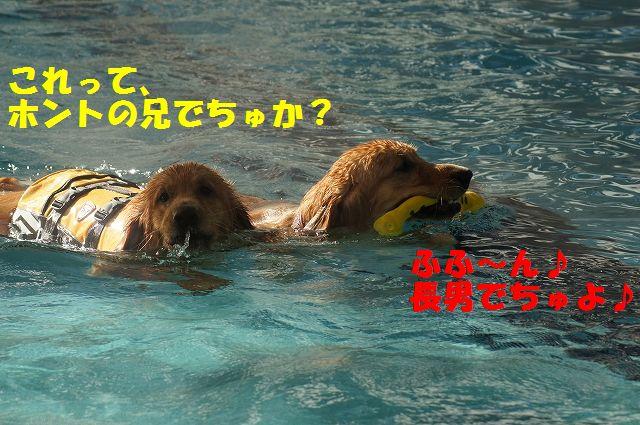 9_20121226041128.jpg