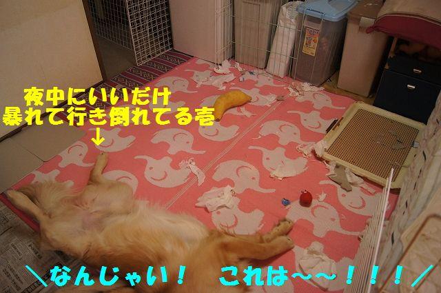 9_20130103172120.jpg