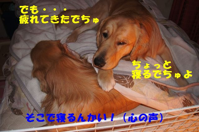 9_20130111210317.jpg