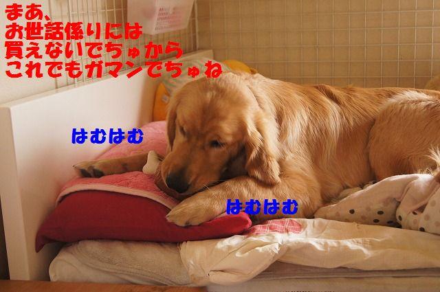 DSC00974_20120519230511.jpg