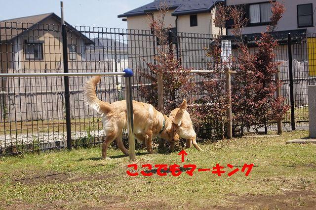 DSC01131_20120523184408.jpg