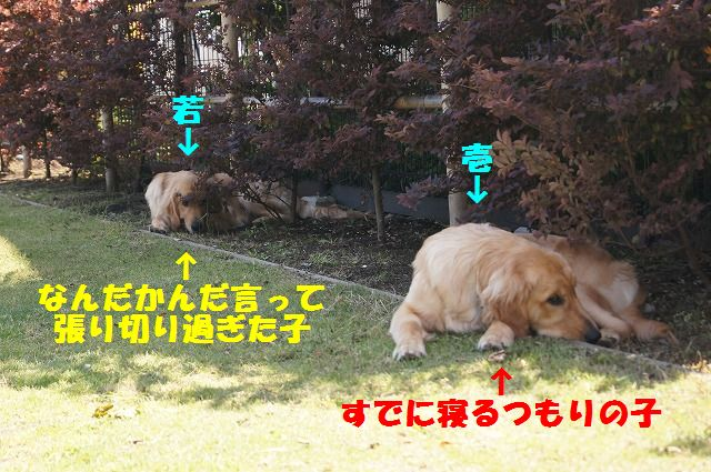 DSC01257_20120523192606.jpg
