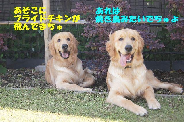 DSC01264_20120523192605.jpg