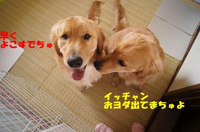 DSC01277_20120525231640.jpg