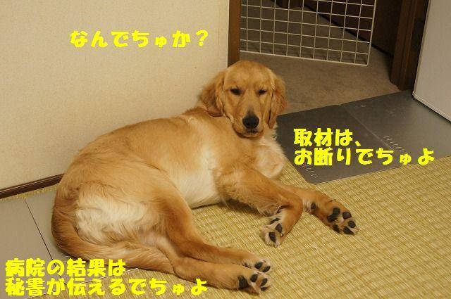 DSC09762_20120420203745.jpg