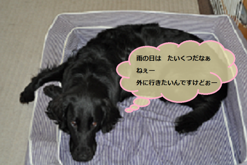 201206172059599ce.png