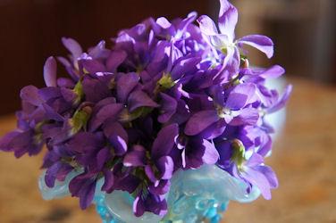 violet042213_02_250