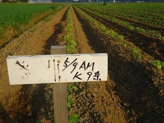 枝豆栽培 002