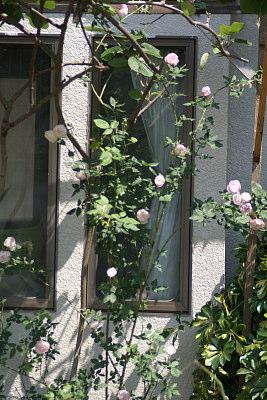 0521-19マダムピエールオジェ