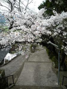 亀井山東前寺7