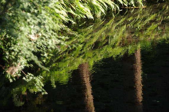 美しき白川水源3