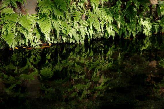 美しき白川水源6